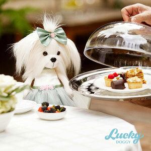 LD012_Lucky Mimi_ph10